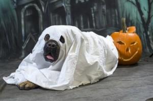 disfraces-divertidos-para-mascotas