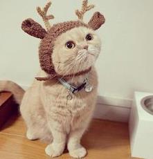 disfraces-geniales-para-gatos